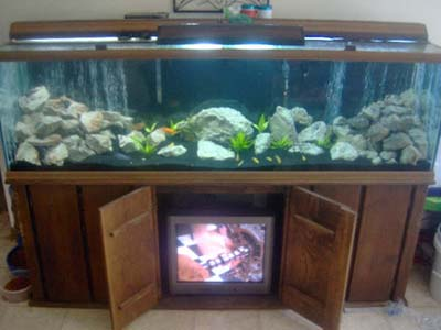 My 120gal mbuna tank myfishtank net photo gallery for African cichlid tank decoration