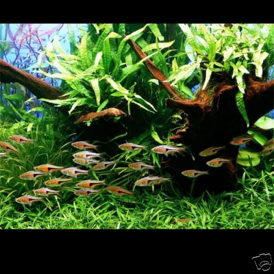 Freshwater saltwater aquarium fish tank forum for Live fish tank