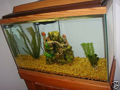 30 gallon aquarium fish tank all accessories included Thirty gallon fish tank