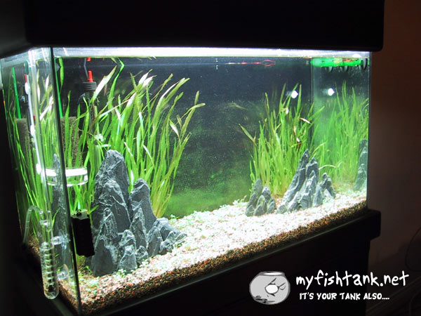 20 gallon aquarium ideas 20 gallon stocking ideas for 55 gallon aquarium decoration ideas