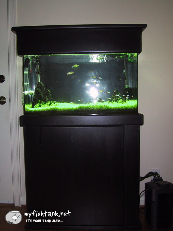 Aquarium Lighting Canopy - Compare Prices on Aquarium Lighting