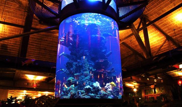 Cylinder tank for Fish tank las vegas