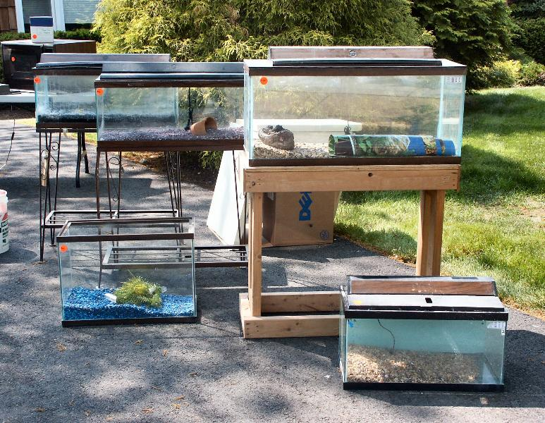 Top 5 things not to do when setting up a fish tank for Fish tank sizes