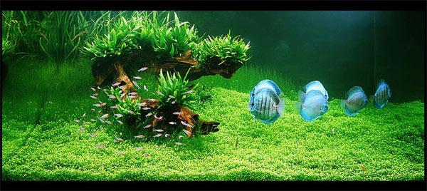 Аквариум с красивыми рыбами.