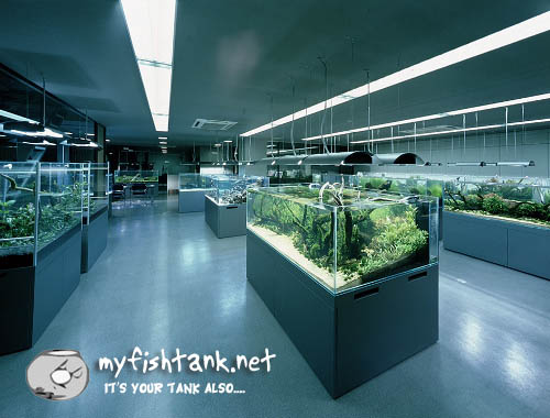 cleanest local fish store ever fish store 500x380