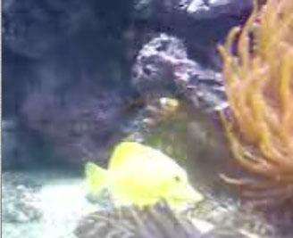 clownfish-qtvideo.jpg