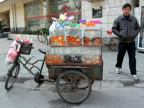 goldfishcart2.jpg