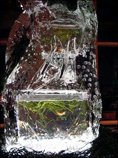 icyfishtank2.jpg