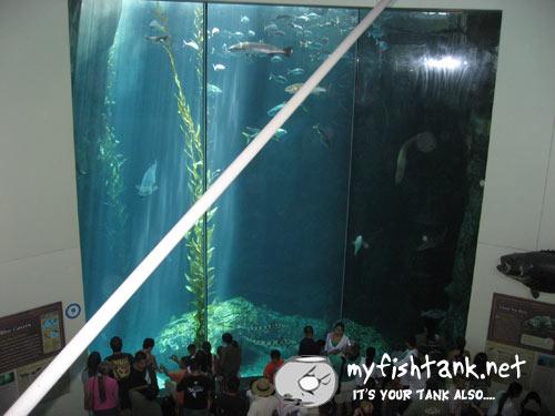 lbaquarium-giantbass.jpg