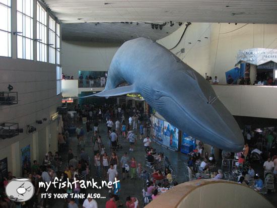 longbeachwhale.jpg