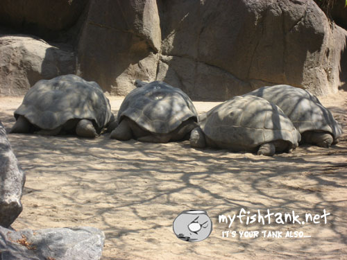 sdzoo-tortoise.jpg