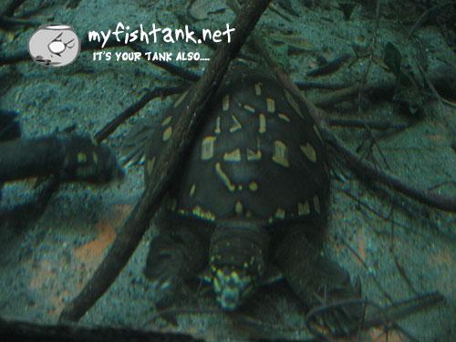 sdzoo-turtle-pattern.jpg
