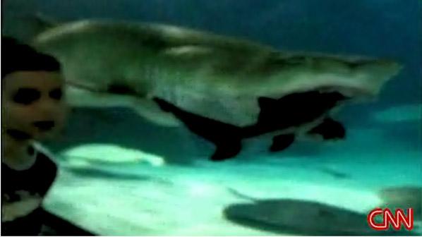 Big shark attacks little shark