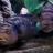 Cichlids-N-Jacks